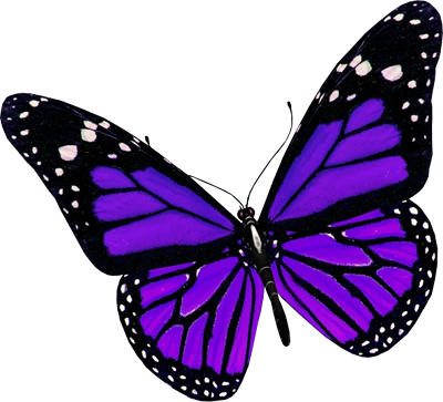 butterfly_PNG1056